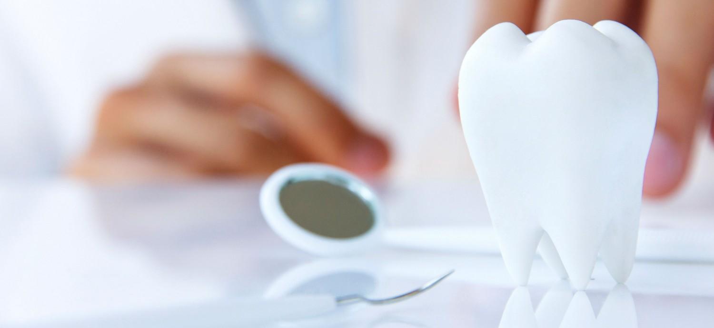 макет зуба