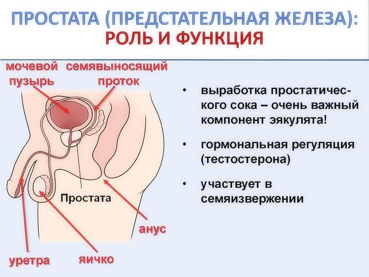 Простатиты у мужчин влияет на женщину простатит пенза