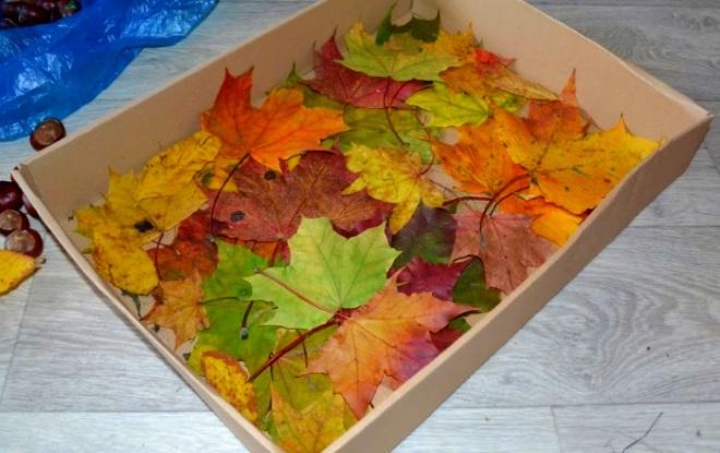 Листья в коробке