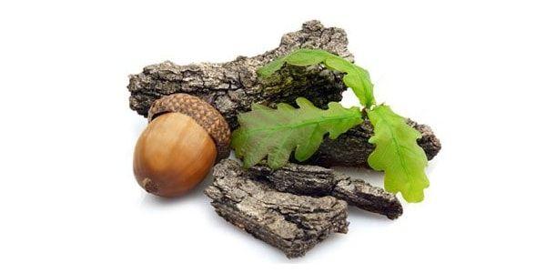 Лечение геморроя корой дуба