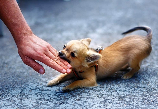 собака кусает руку