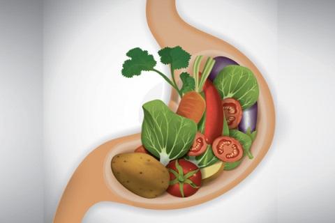 еда в желудке