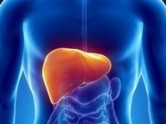 Жировая дистрофия печени: как вылечить гепатоз?